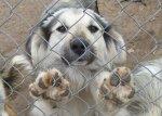 Не всі бажають собакам зла