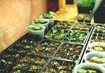 Лунно-солнечный посадочно-посевной календарь огородников и цветоводов на 2010 год