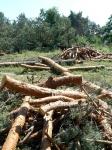 Будівництво ТРЦ: кожне знищене дерево буде компенсоване і відшкодоване