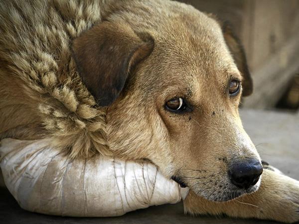 За знущання над  домашніми тваринами засуджено мешканця Білокуракинського району