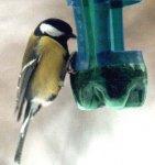 Потурбуймося про птахів разом!