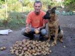 Копаючи картоплю…