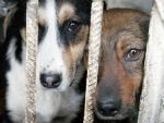 За тиждень у місті зафіксовано два випадки покусів собаками