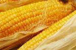 Чоловіки попалися на крадіжці кукурудзи. А вирощувати не пробували?