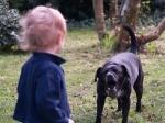 За останній тиждень собаки покусали трьох світловодців
