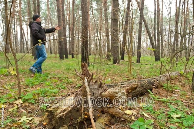 Разрешит ли Светловодский горисполком очистить лес пенсионеру Петухову?