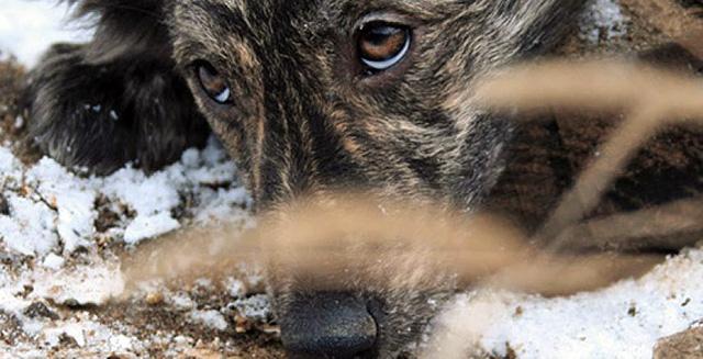 Защитите наших детей от бродячих собак!