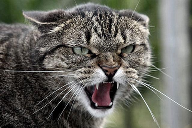 Бродячий кіт покусав чоловіка у Світловодську