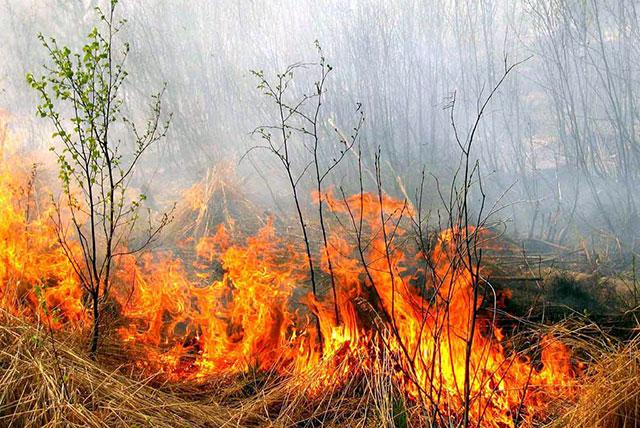 Попередження про високу пожежну небезпеку на території регіону
