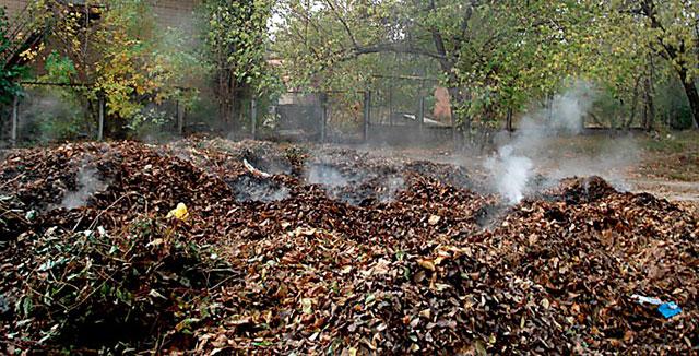 Спалювати опале листя категорично заборонено