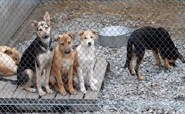Нагальна проблема — Світловодську потрібен притулок для бродячих собак