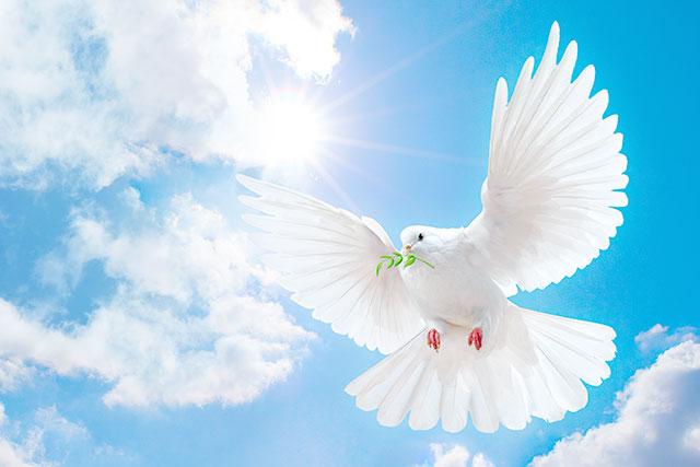 Голуби миру прикрасили Центр дитячої та юнацької творчості