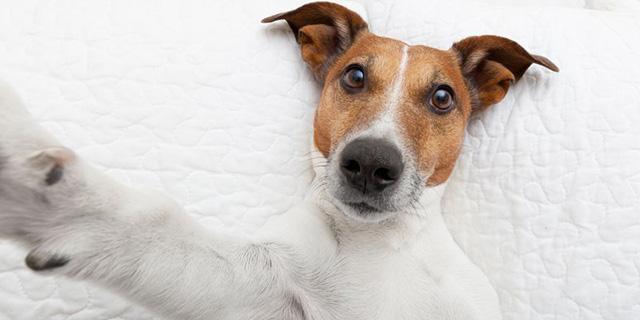 Шукаємо найгуманніший спосіб вирішення проблеми бродячих собак!