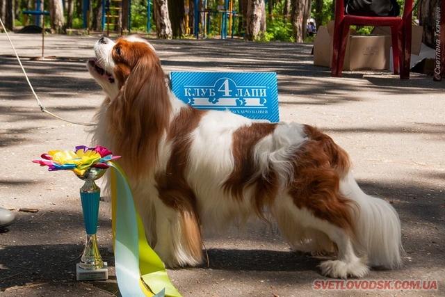 Виставка собак відбулася у Світловодську
