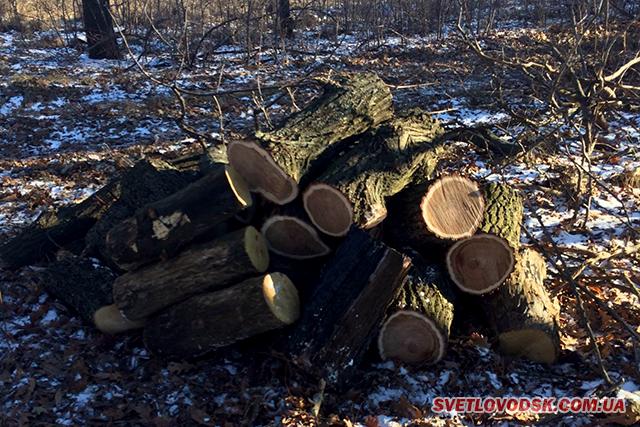 Нещасний випадок у лісі — загинув чоловік, травмований бензопилою