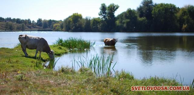 Спортивна чи любительська риболовля у «яремівських» ставках дозволена всім охочім
