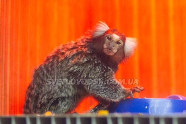 """ФОТОФАКТ: Виставка """"Дім приматів"""" у міському Палаці культури"""
