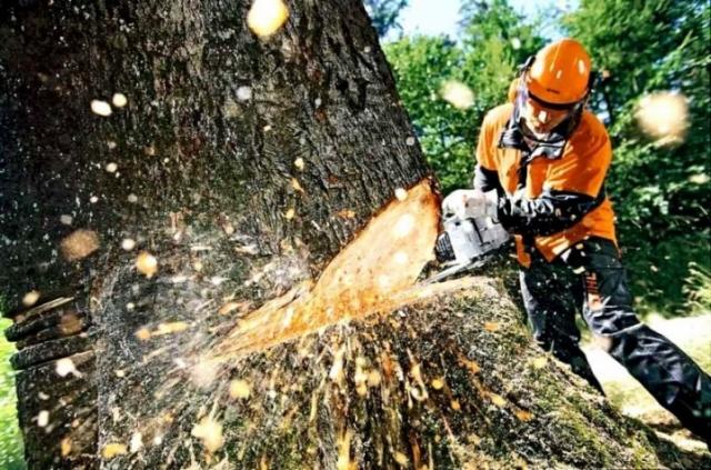 На Світловодщині колишнього керівника лісгоспу викрито у незаконній порубці лісу
