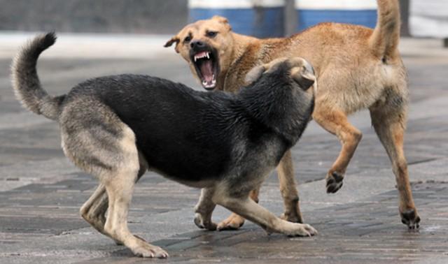 Районного травматолога ледь самого не травмували… собаки