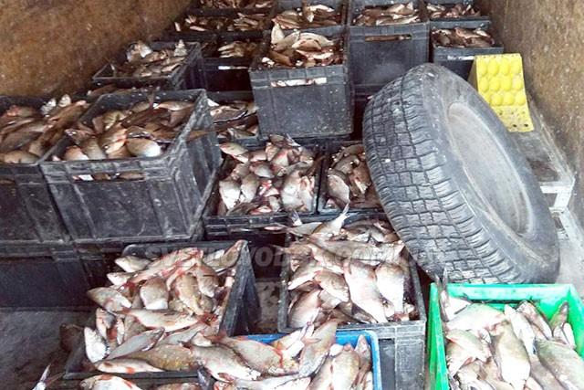Спіймати 800 кг риби у нерест — це круто!