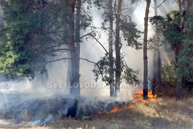 ВІДЕОФАКТ: Лісова пожежа у Світловодську