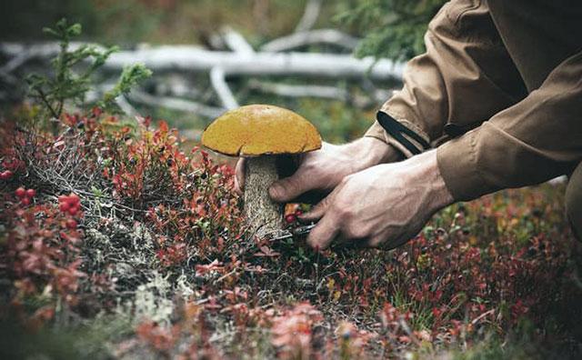 Полюбляєте гриби? Будьте обережні!