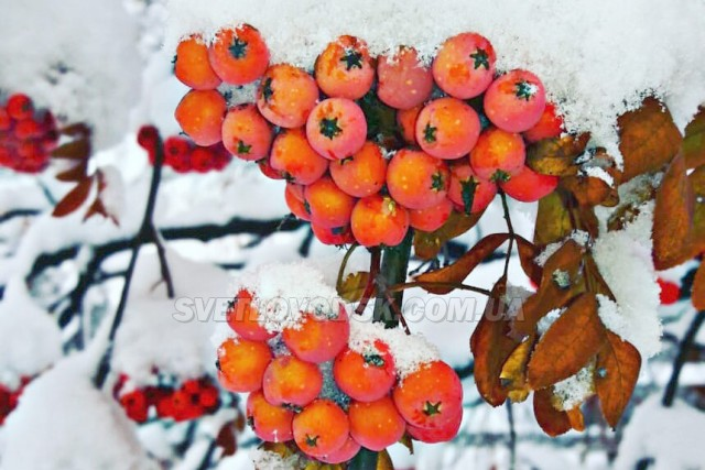 ФОТОФАКТ: У Світловодську випав перший сніг (ОНОВЛЮЄТЬСЯ)
