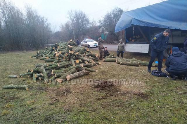 Працівники поліції встановлюють обставини незаконної порубки лісу
