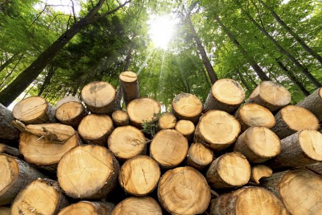 Оголошено підозру директору та лісничому ДП «Світловодське лісове господарство»