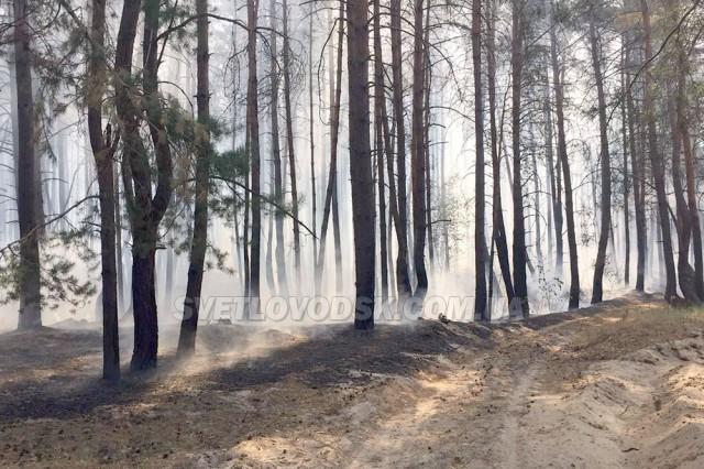 У Світловодську пожежники та лісова охорона врятували 40 гектарів лісу від знищення вогнем