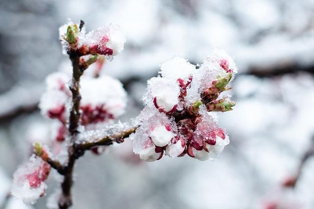 На території Кіровоградської області очікуються сильні заморозки