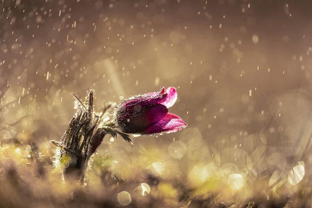 Теплі дощі чекають на Світловодськ у першому тижні червня