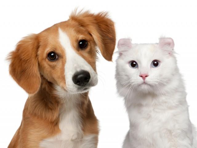 Новий закон захищатиме права тварин