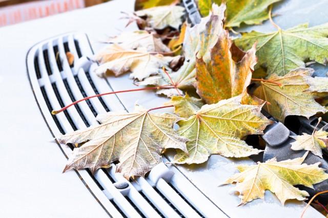 До нас йде похолодання та заморозки. Прогноз погоди на 4-13 вересня